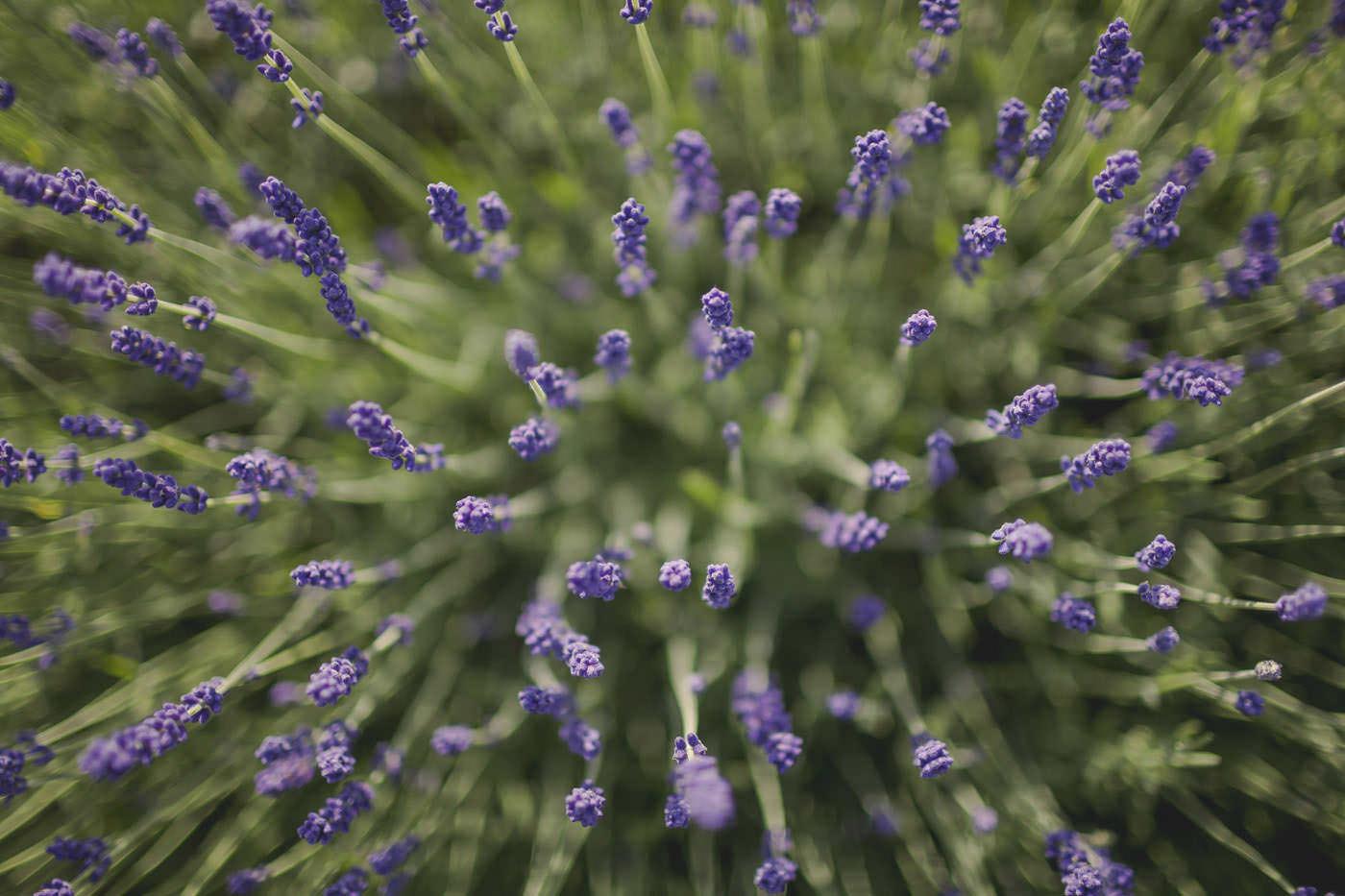 chrissarah walled garden midhurst wedding photographer 0111